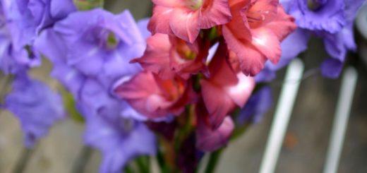 vaso di gladioli