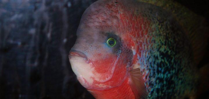 pesce pappagallo nella barriera corallina