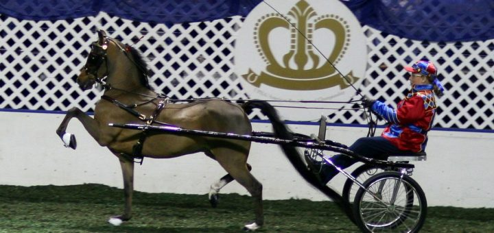 hackney cavallo