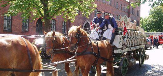 Jutland cavallo d atiro
