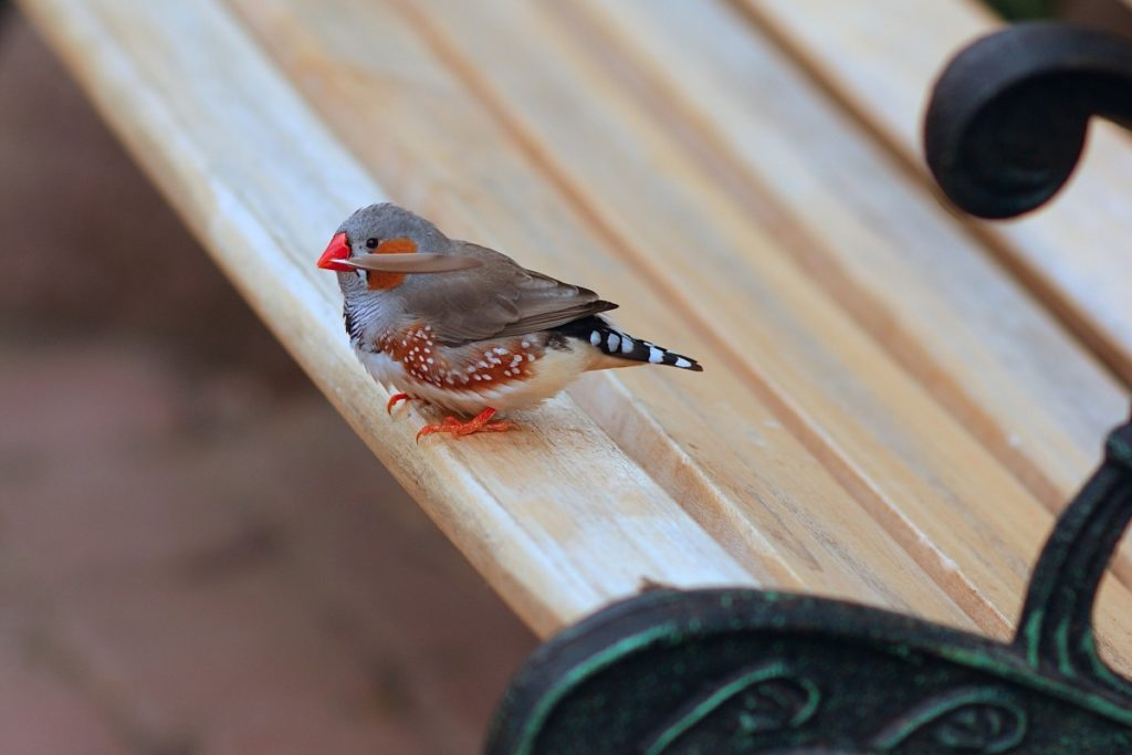 con penna nel becco per il nido