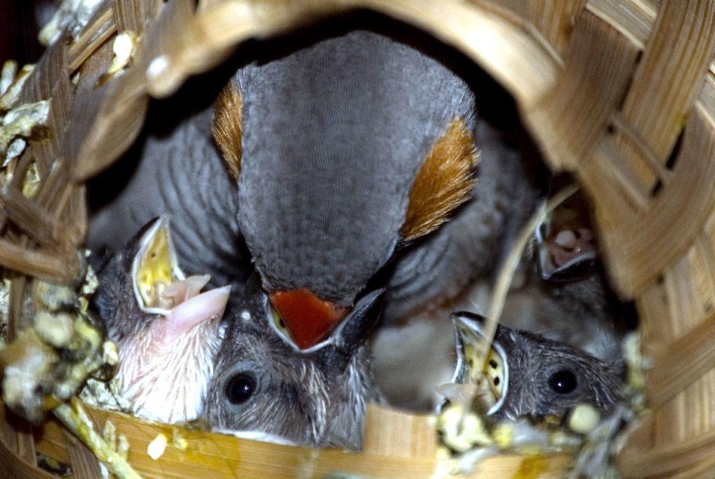 imbeccata nel nido