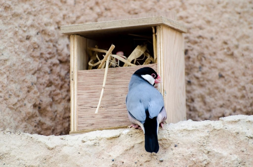 sul nido