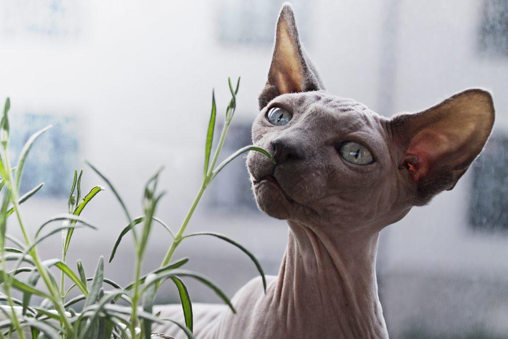 il gatto nudo