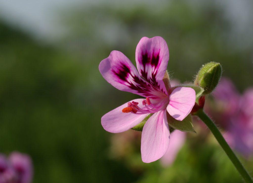 dettaglio fiore